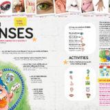 SENSES_v3